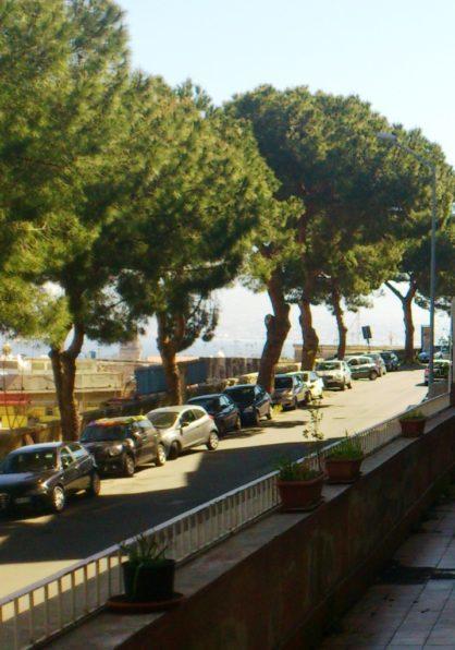 Messina. Riqualificazione alberature cittadine, il punto del sindaco tra ambiente e sicurezza per i cittadini