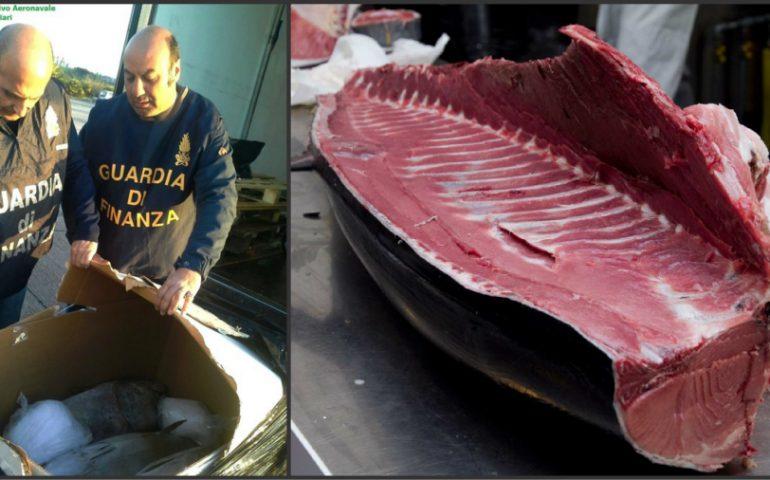 Guardia di Finanza, sequestra 1400 kg tonno rosso sprovvisto di tracciabilità ed etichettatura