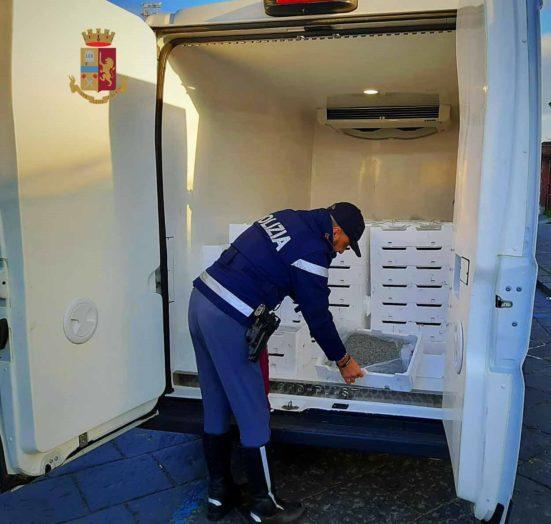 Barcellona PG. Sequestrati oltre 1.100 kg di novellame di sarda, sanzioni per 38 mila euro