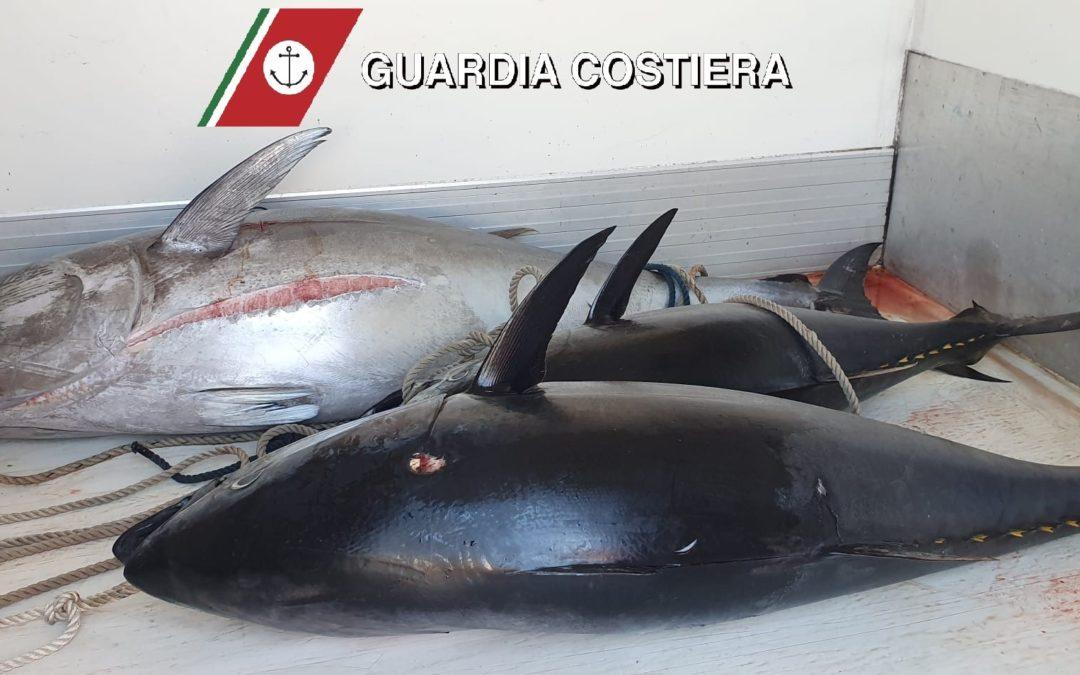Milazzo. Sequestrati tre esemplari di tonno rosso, per oltre 225 kg