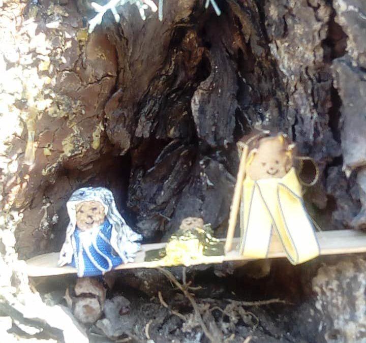 Barcellona PG. Sorpresa 'artistica' in un tronco d'albero