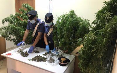 Coltiva piante di cannabis in casa, arrestato 45enne e denunciato la moglie